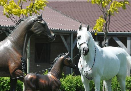 Dion Arabians