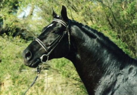 Goldstar Horse Breeding Station