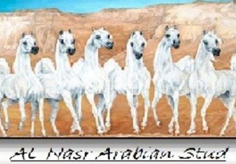 AL Nasr Arabian Stud
