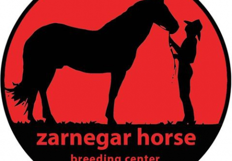 zarnegar horse breeding center(MY HORSE)