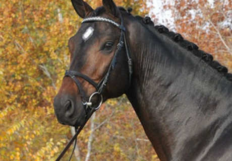 Marquis Sport Horses, LLC