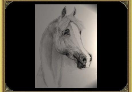 Kida Arabians