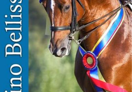 Wonderful Sport Horses