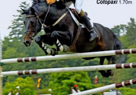 Synergy Sport Horses