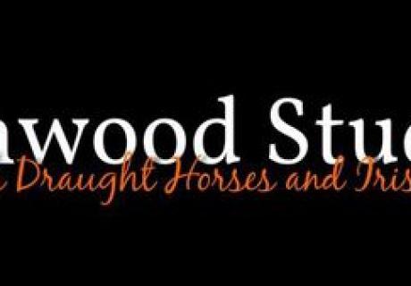 Lionwood Irish Draughts and Sport Horses