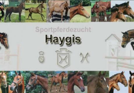 Sportpferdezucht Haygis