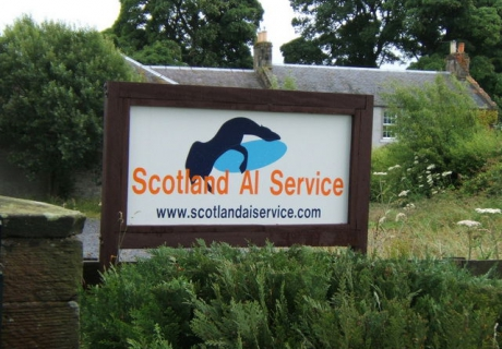 Scotland AI Service