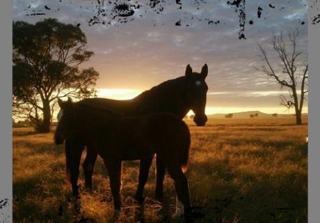 MON'RIEVE PERFORMANCE HORSES