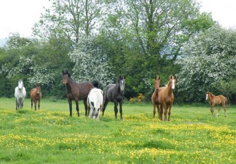 kilcoltrim horses