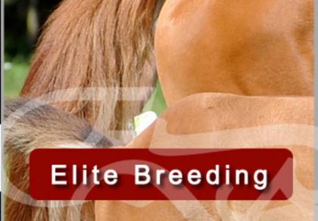'Equimedic Elite Breeding'