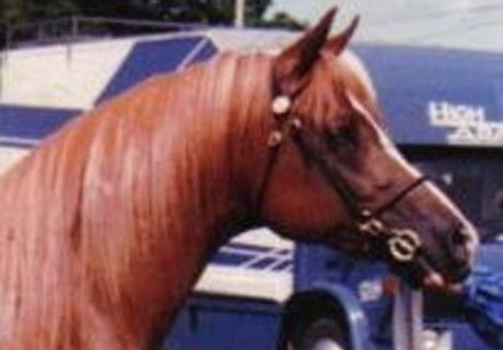 Lyndale Arabians