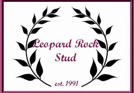 Leopard Rock Sport Horse Appaloosa Stud