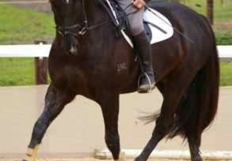 Romley Sporthorses