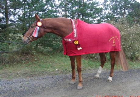 Zucht Sport Pferde