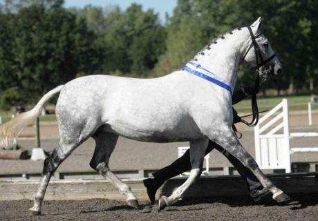 Aredis Sports Horses