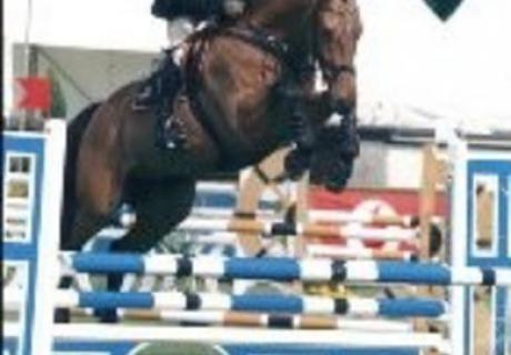 Ballyshan Horses