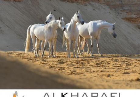 al kharafi arabians