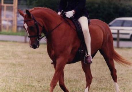 Antsar Ponies