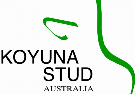Koyuna Stud Australia