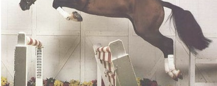 Elite Hanoverian Stallion Landkönig Passes Away at 29