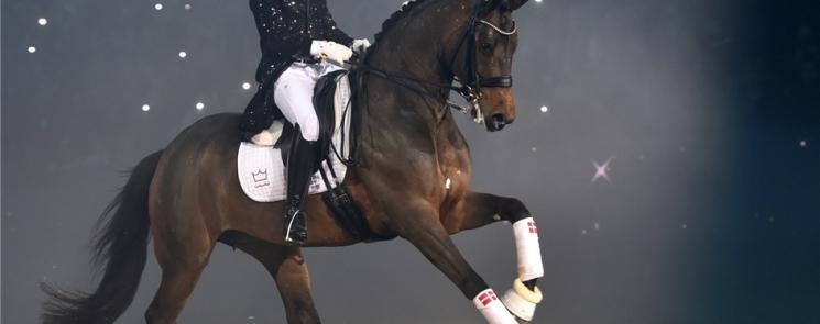 Danish Stallion Show A celebration of sport and breeding