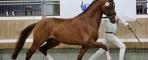 33 stallions selected for NRPS stallion inspection