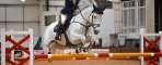 Image: Rexter D'Or (Credit: Horsepower Creative)