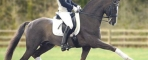 Belissimo M  Dressage Olympic/World Championships