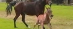 How to Manage Foal Rejection With Your Mare