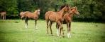 Foals in a Field
