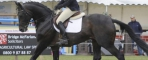 Grafenstolz takes both the British Eventing Top Sire and Top Young Horse Sire for 2017