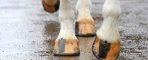 Four Tips to keep your Horse Hooves good this Summer
