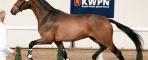 OK for Breeding for KWPN new stallions
