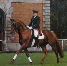 Bolero's Hanoverian Bloodlines Impact Dressage