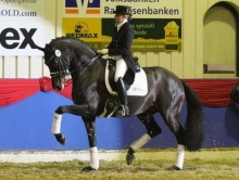 Fürstenball Danish Stallion of the Year 2018