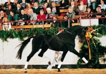 Heraldik xx 1st place in the WBFSH ranking list for eventing horse sires for many years