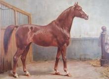 Influential Bloodlines in Hanoverian Breeding