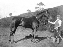 Bay Ronald 1893