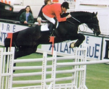 Hand In Glove International Showjumping Thoroughbred
