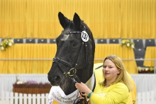 Hanoverian Mare of the Year 2017 for State premium mare Sarah