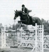 Remember The Thoroughbred Option - Sixteen Special Thoroughbreds & Riders That Jump