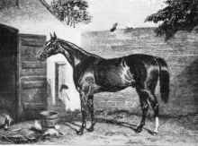 Irish bred Thoroughbred Birdcatcher