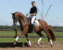 Andreas Helgstrand and Blue Hors Don Caruso