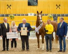 Dorina is the 2018 Hanoverian Mare of the Year