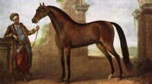 Findings challenge long-held assumptions about the Arabian horse