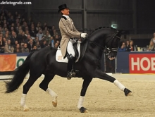 Gribaldi International Dressage Stallion