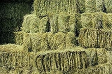 Benefits of High-Temperature Steaming of Horse Hay