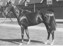 Remember The Thoroughbred Option - Fourteen