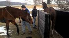 mare breeding