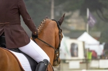 Abnormal behaviour during tacking‐up and mounting is common, study finds